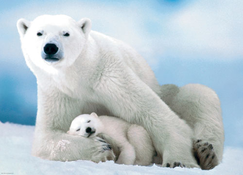 Polar Bear and Baby Baby Animals Jigsaw Puzzle