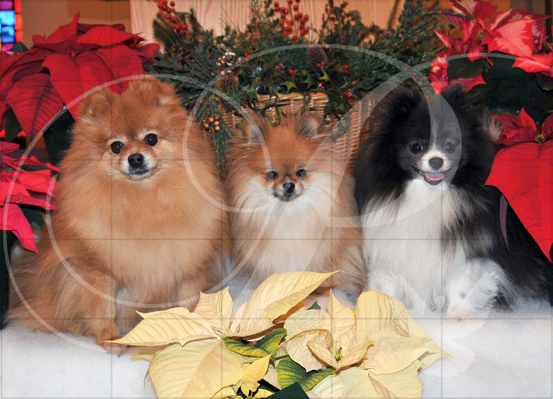 Christmas Triplets Animals Wooden Jigsaw Puzzle