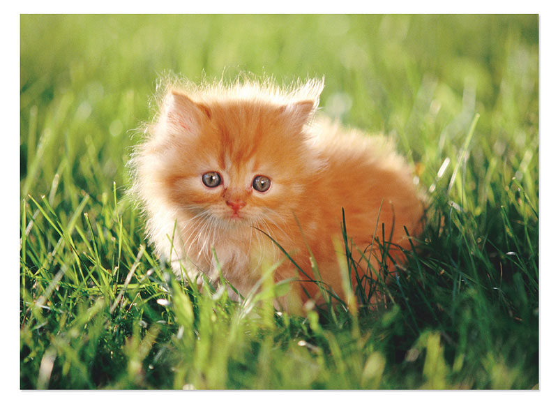 Orange Kitten Cats Children's Puzzles