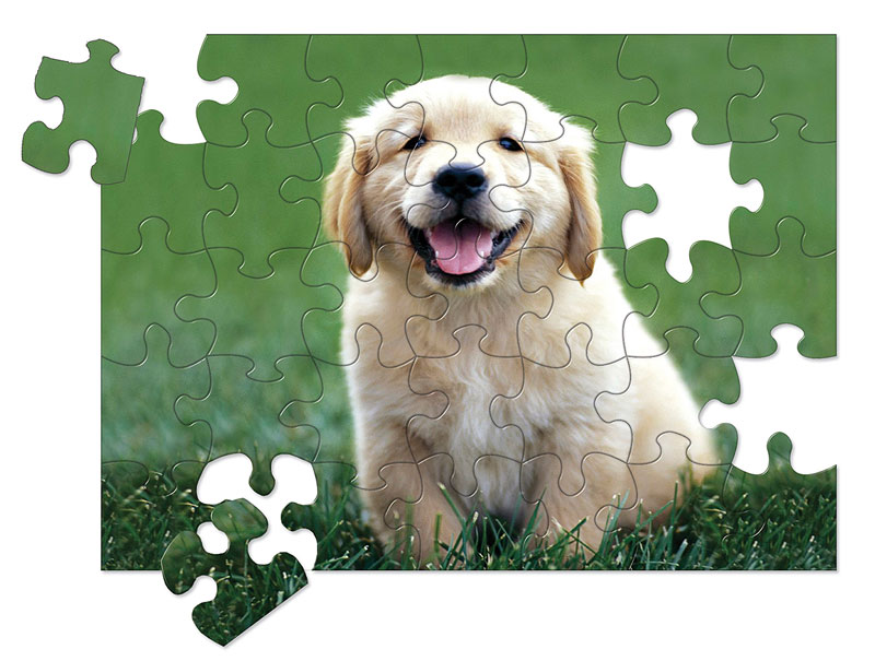 Golden Retriever Puppy Dogs Children's Puzzles