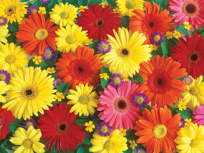 Delightful Daisies Flowers Jigsaw Puzzle