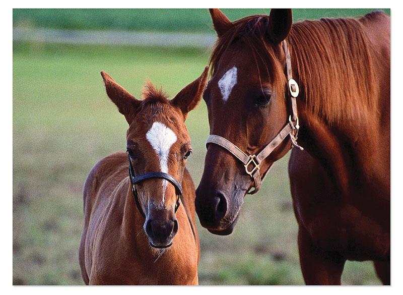 Mare & Foal Horses Children's Puzzles