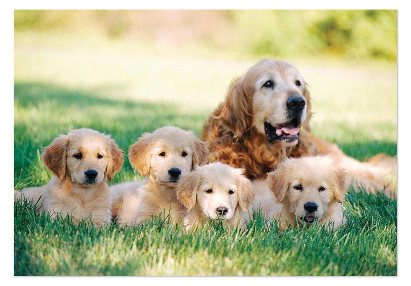 Golden Retriever w/Puppy Dogs Children's Puzzles