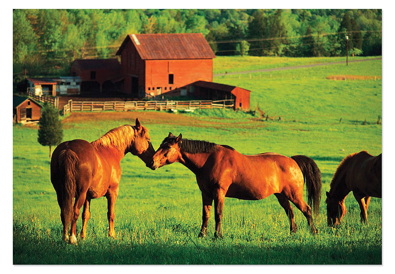Kissing Horses Horses Children's Puzzles