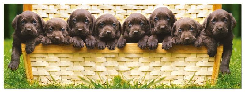 Puppies - Panorama Dogs Jigsaw Puzzle
