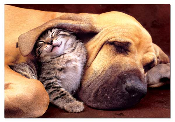 Sweet Dreams Dogs Jigsaw Puzzle