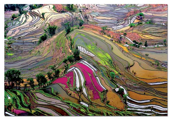 Rice Paddies, China Landscape Jigsaw Puzzle
