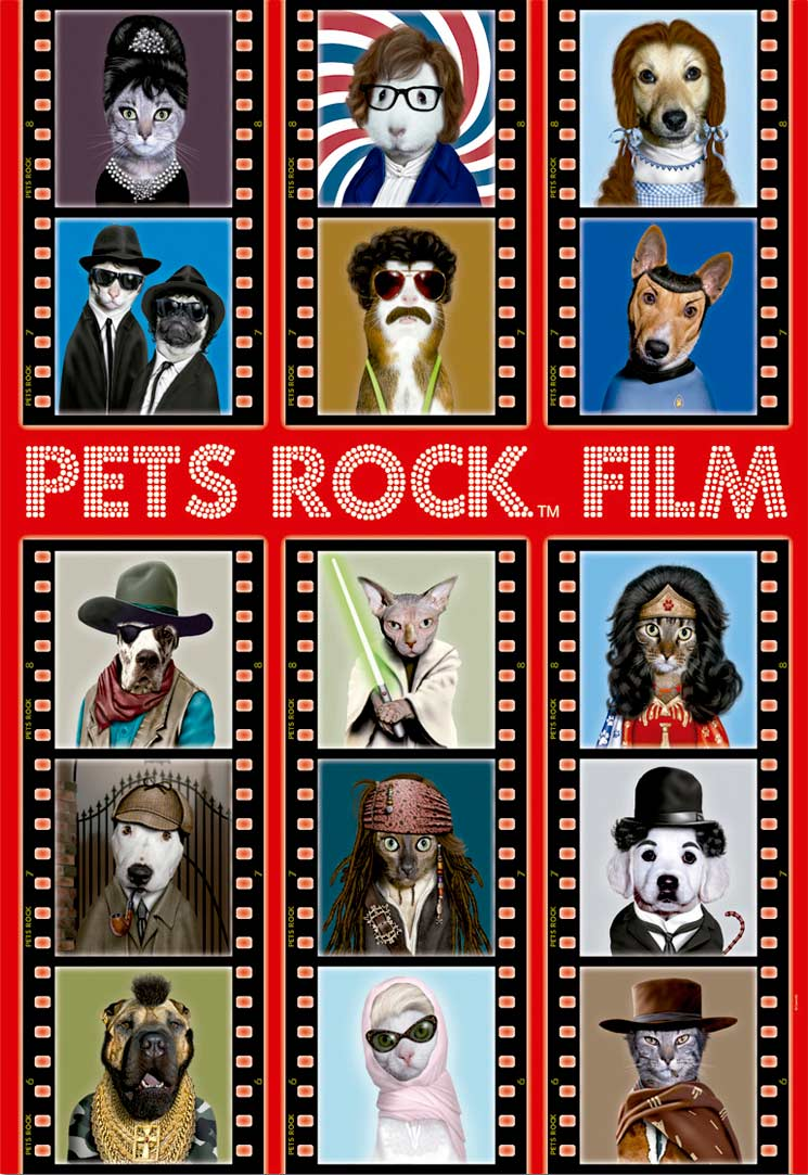 Pets Rock Film Cats Jigsaw Puzzle