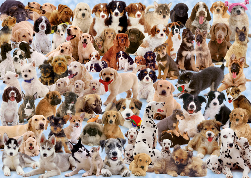 Dogs Galore! - Scratch and Dent Dogs Jigsaw Puzzle