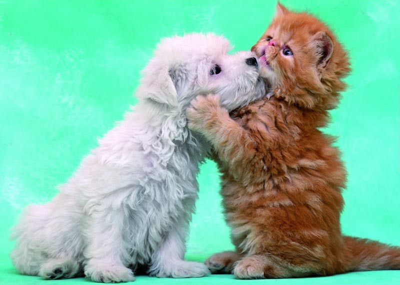 Hugs and Kisses Cats Jigsaw Puzzle