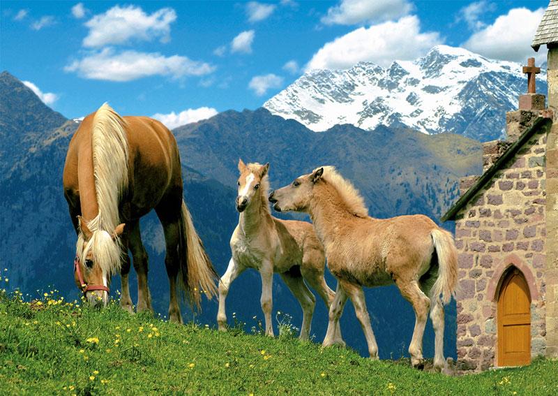 Haflinger Horses Horses Jigsaw Puzzle