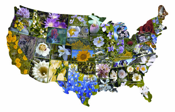 Official Flowers of the States Collage Jigsaw Puzzle