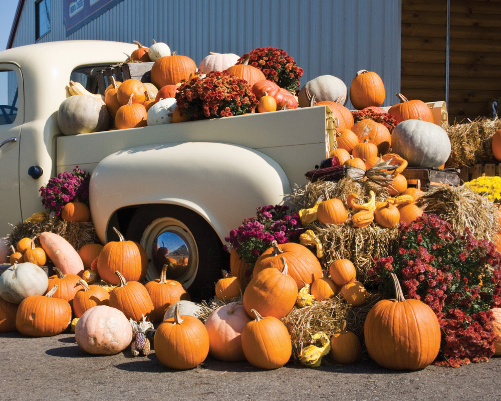 Autumn Harvest Fall Jigsaw Puzzle