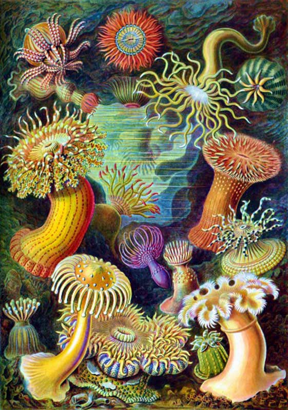 Sea Anemones Under The Sea Wooden Jigsaw Puzzle