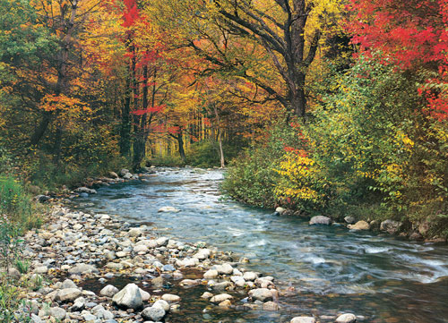 Forest Stream Fall Jigsaw Puzzle