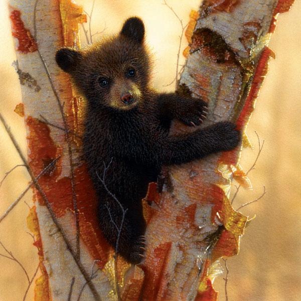 Curious Cub Bears Jigsaw Puzzle