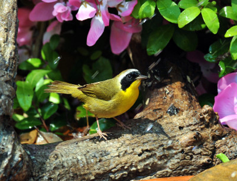 Common Yellowthroat Birds Wooden Jigsaw Puzzle
