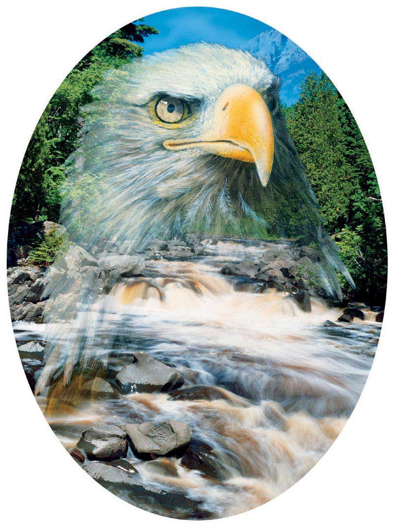 From Above Eagles Jigsaw Puzzle