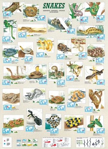 Snakes Reptiles and Amphibians Jigsaw Puzzle