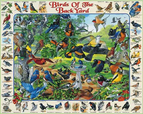 Birds of the BackYard Birds Jigsaw Puzzle