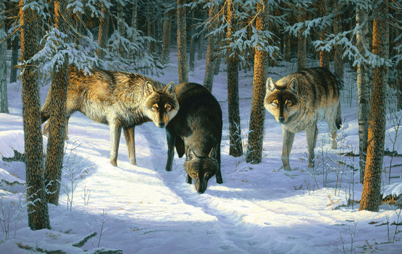 Wolf Trio Wolves Jigsaw Puzzle