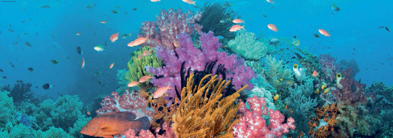 Coral Reef Photography Jigsaw Puzzle