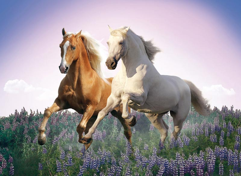 Free Horses - Scratch and Dent Horses Jigsaw Puzzle