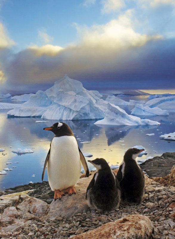 Penguins Birds Jigsaw Puzzle