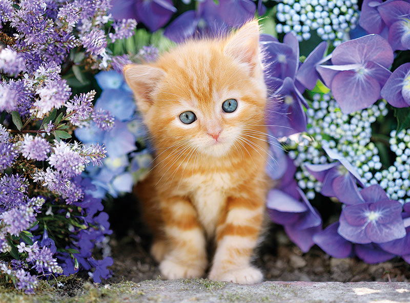 Ginger Cat in Flowers - Scratch and Dent Cats Jigsaw Puzzle