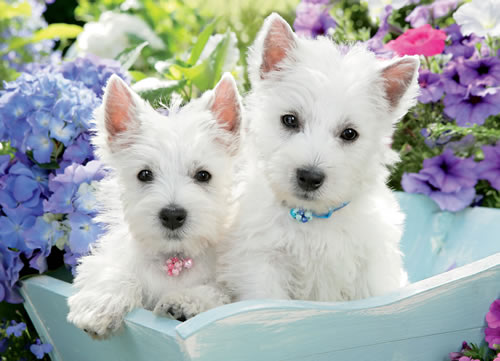 Just Westies Dogs Jigsaw Puzzle