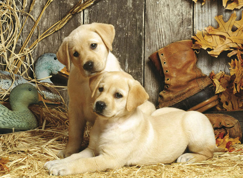 Hunting Dogs Dogs Jigsaw Puzzle