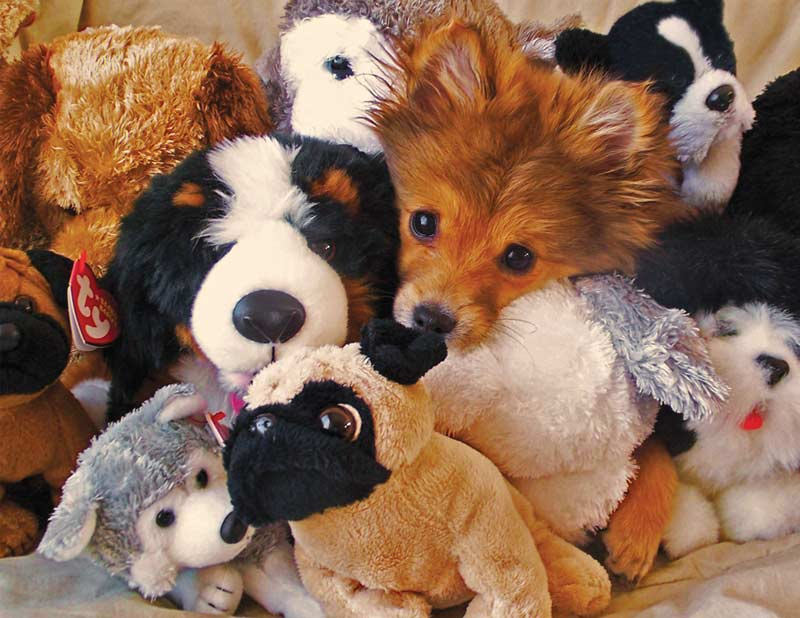 Playtime Puppies Dogs Jigsaw Puzzle