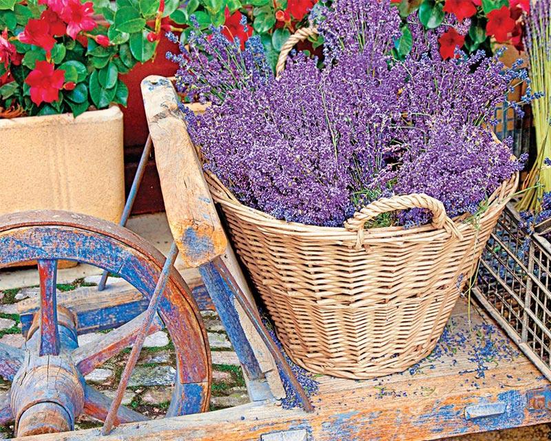 Basket of Lavender Garden Jigsaw Puzzle