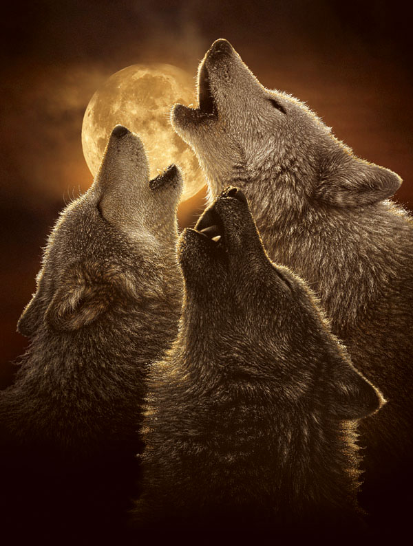 Wolf Trinity Wolves Jigsaw Puzzle