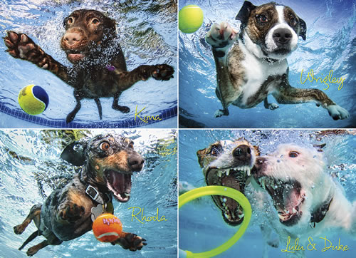 Underwater Dogs 2 Dogs Jigsaw Puzzle