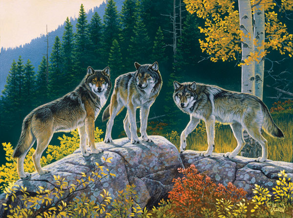 Fall Wolf Trio Wolves Jigsaw Puzzle