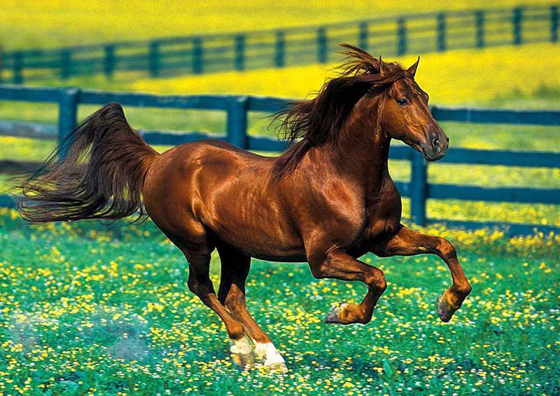 Kentucky Pasture Horses Jigsaw Puzzle