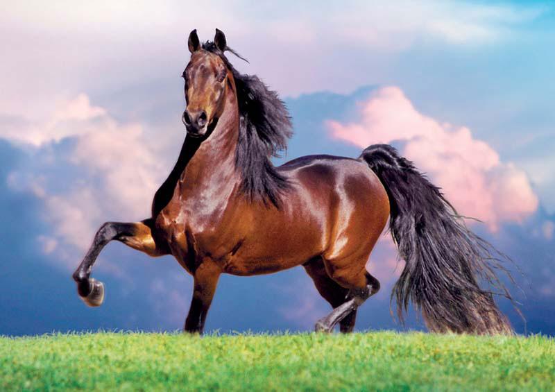 Bay Stallion Horses Jigsaw Puzzle