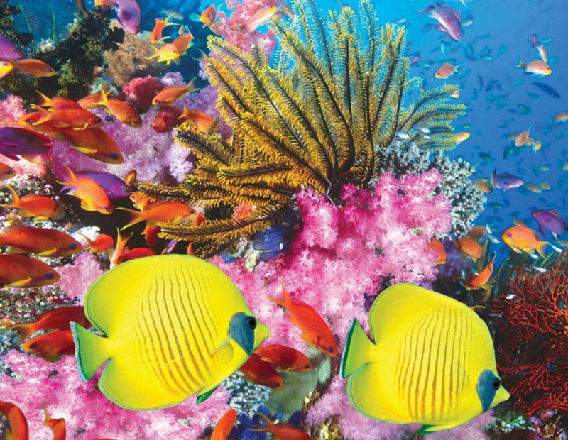 Puzzles to Remember - Coral Carnival - 12 pc Fish Jigsaw Puzzle