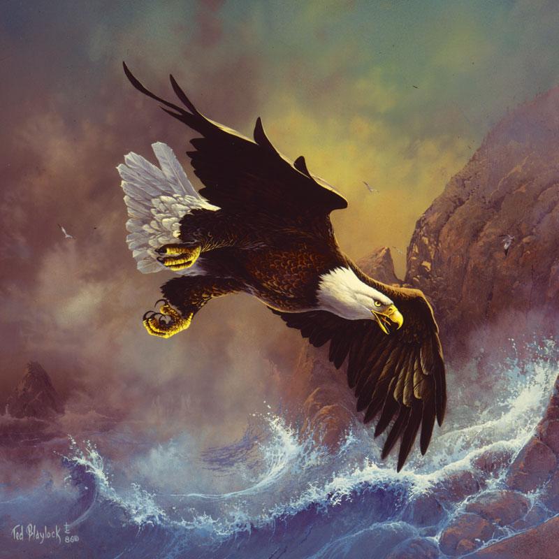 Seaside Eagle Eagles Jigsaw Puzzle