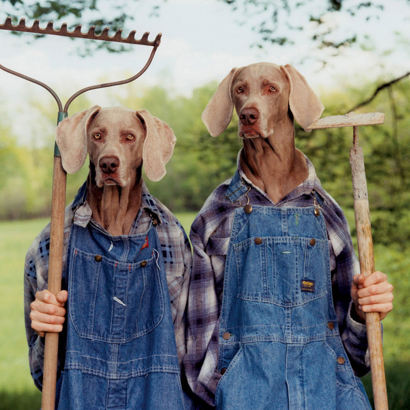 Farm Days Dogs Jigsaw Puzzle