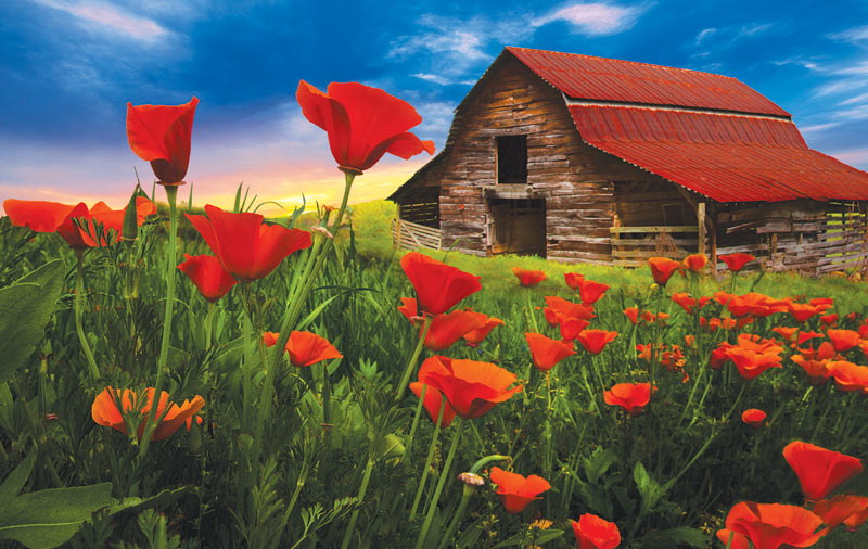 Barn in Poppies Countryside Jigsaw Puzzle