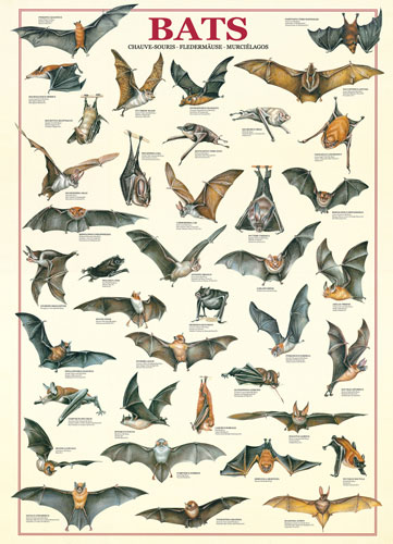 Bats Other Animals Jigsaw Puzzle