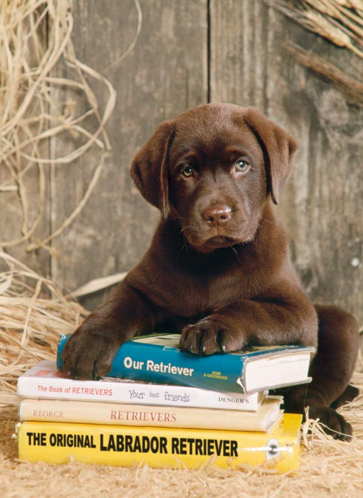 Laying on the Books - Scratch and Dent Dogs Jigsaw Puzzle