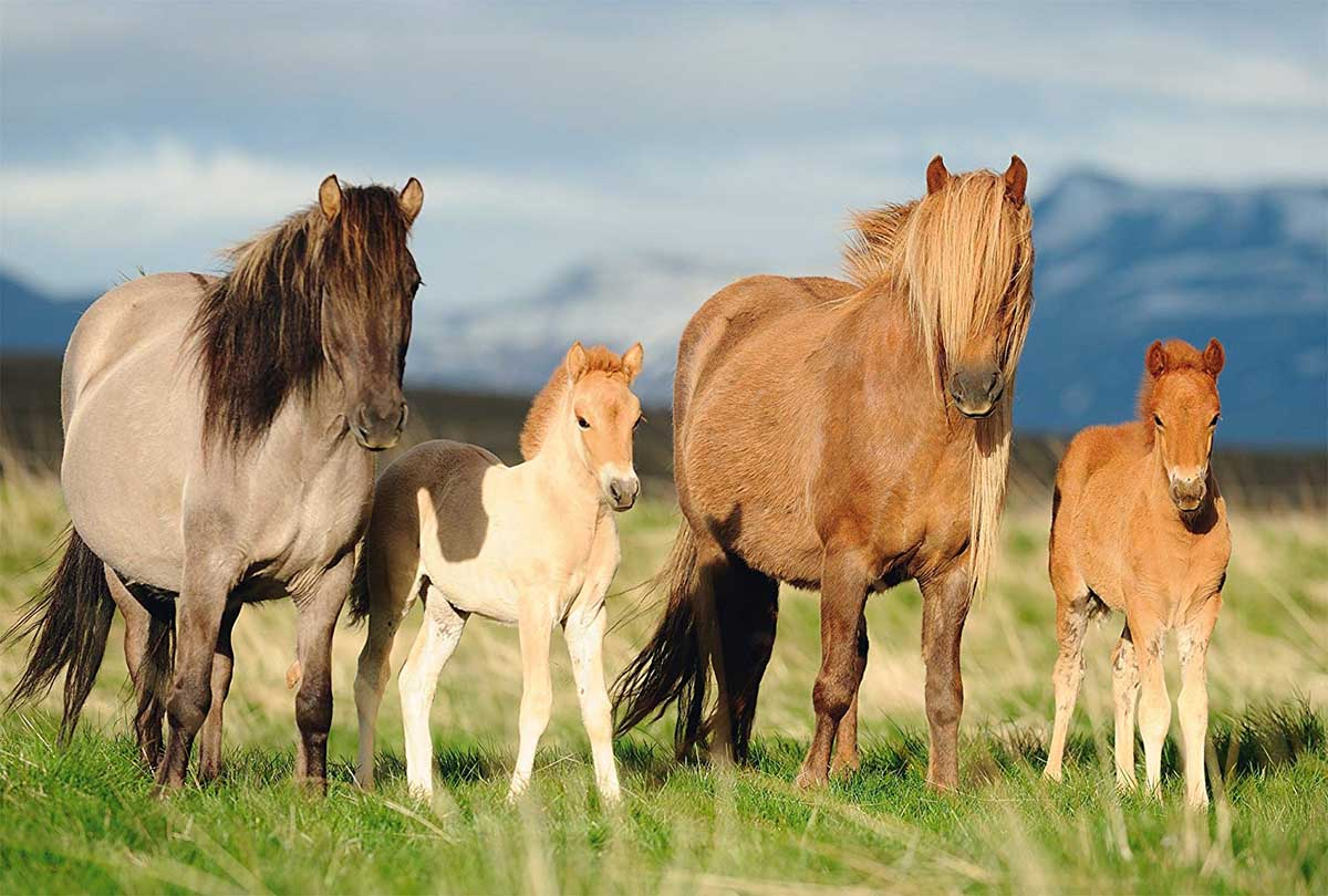 Family of Horses Horses Jigsaw Puzzle
