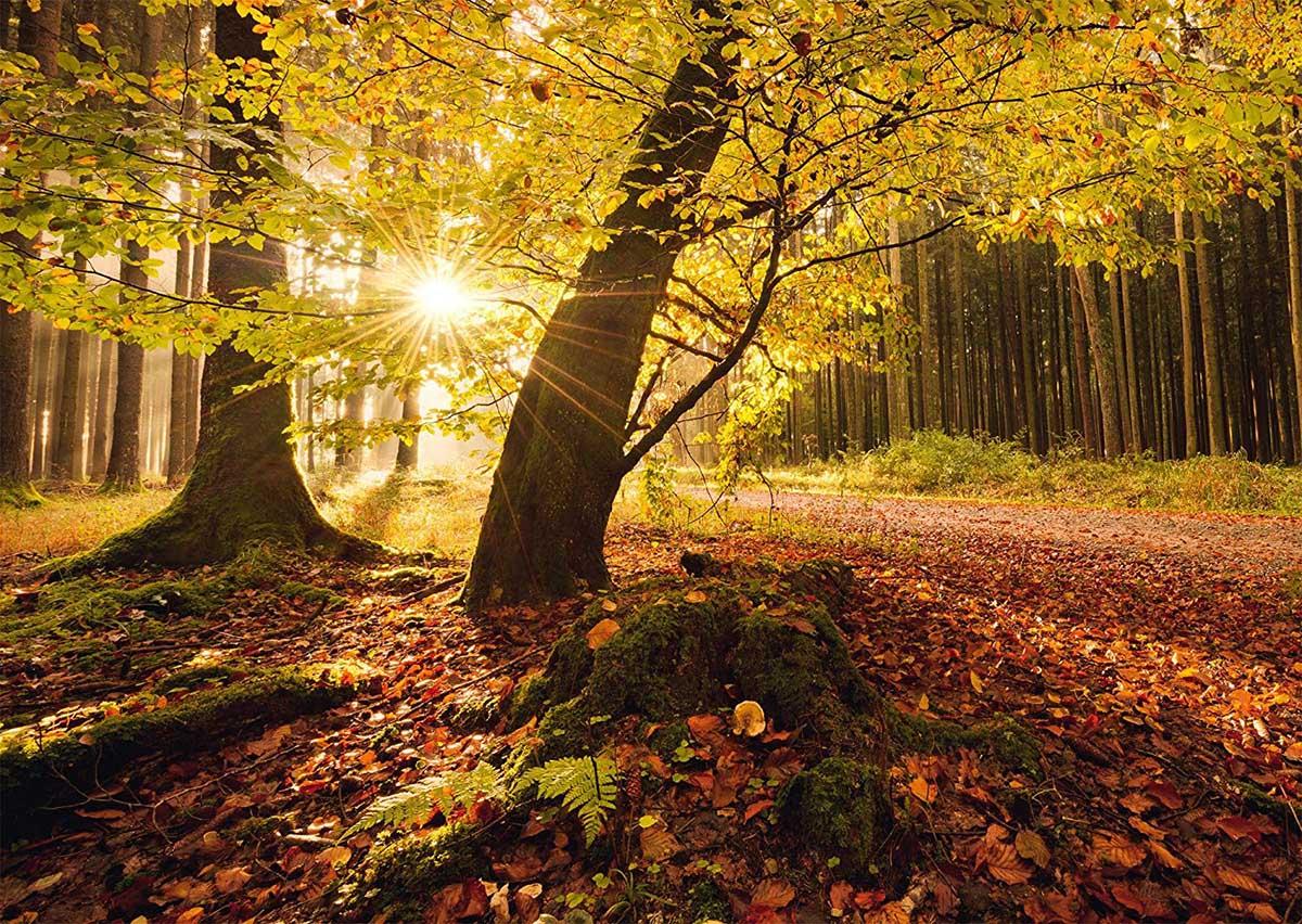 Autumn magic Fall Jigsaw Puzzle