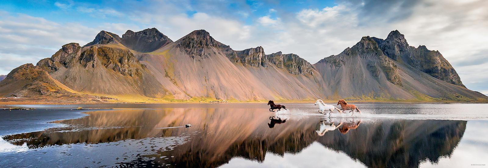Iceland Horses Horses Jigsaw Puzzle