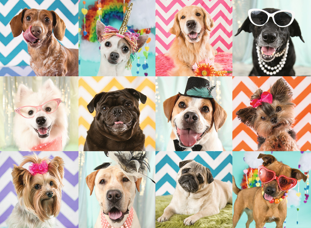 Doggy Disguise Dogs Jigsaw Puzzle