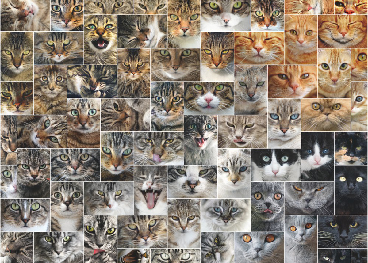 Cat Collage Cats Jigsaw Puzzle
