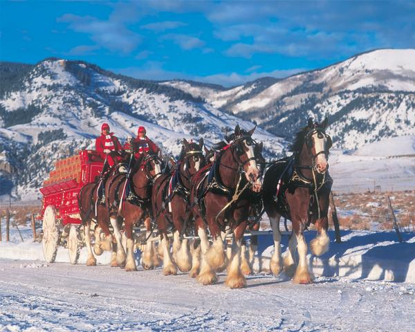 Winter Bliss Horses Jigsaw Puzzle